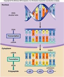 12 Best Biology Diagrams Images On Pinterest