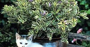 Immergrüne Pflanzen Für Balkonkasten : herbst balkon pflanzen raum und m beldesign inspiration ~ Markanthonyermac.com Haus und Dekorationen