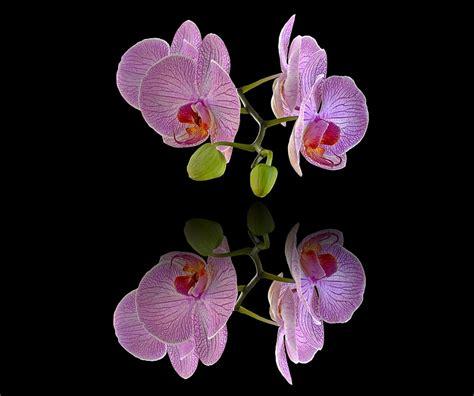arriere plan de bureau photo gratuite orchidées fond d 39 écran image gratuite