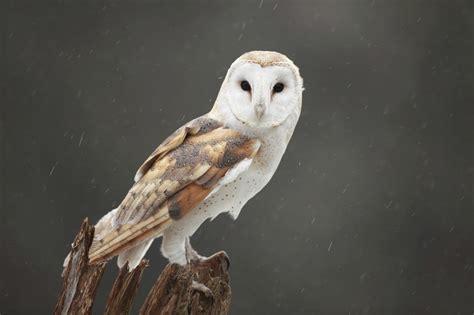 Top 10 Most Dangerous Birds In The World