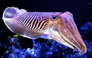 High Need Parenting: Cuttlefish & Cabin Fever | Weekend ...