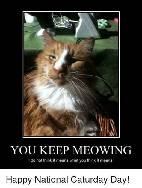 Caturday Meme - funny caturday memes of 2016 on sizzle cats