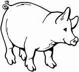 Pig Coloring Pages Bellied Pot Animals Template sketch template