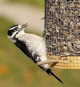 Graines De Tournesol Pour Oiseaux : des mangeoires pour les oiseaux ~ Dailycaller-alerts.com Idées de Décoration