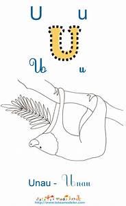Animal Qui Commence Par U : unau explication t te modeler du mot unau ~ Medecine-chirurgie-esthetiques.com Avis de Voitures
