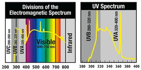 vitamin d uvb experiment and l comparison toxinless