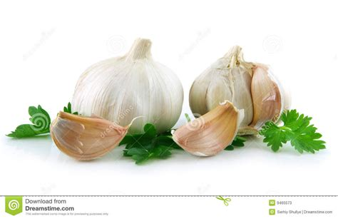 is garlic a vegetable garlic vegetable with green parsley leaves stock photos image 9465573