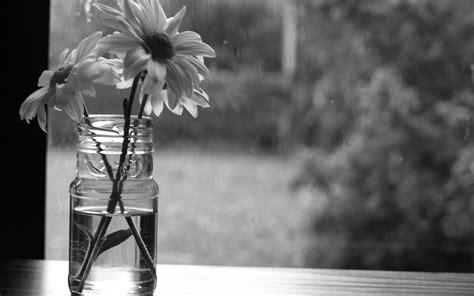 flores monocromo fondos de pantalla flores monocromo