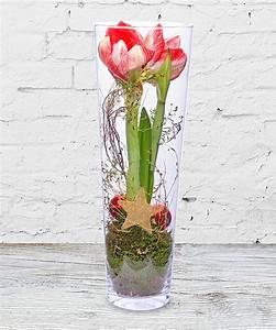 Amaryllis Im Glas : amaryllis im glas jetzt bestellen bei valentins valentins blumenversand blumen und ~ Eleganceandgraceweddings.com Haus und Dekorationen