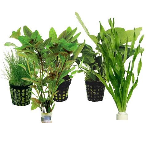 lot de plantes facile pour nano aquarium 5 plantes zone aquatique