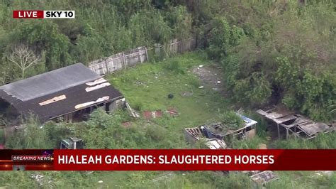 u haul miami gardens 3 horses found slaughtered in hialeah gardens south
