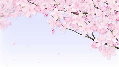 Cherry Blossom Animated Wallpaper - cherry blossom tree stock footage