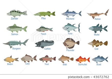 river fish identification slate  names stock