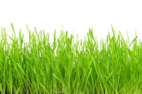 market strategies painting  grass green revisited
