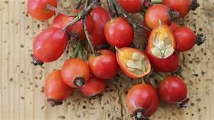 Erdbeeren Ableger Entfernen : wann pflanzt man clematis wann pflanzt man erdbeeren ~ Frokenaadalensverden.com Haus und Dekorationen
