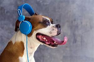 Stressed dogs prefer reggae and soft rock | MNN - Mother ...