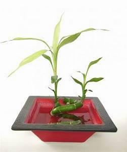 Bambus Pflege In Der Vase : bambus in der vase download der kostenlosen fotos ~ Lizthompson.info Haus und Dekorationen