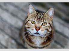 Gestreifte Katzen Bilder » Bilddatenbank » Stockfotos