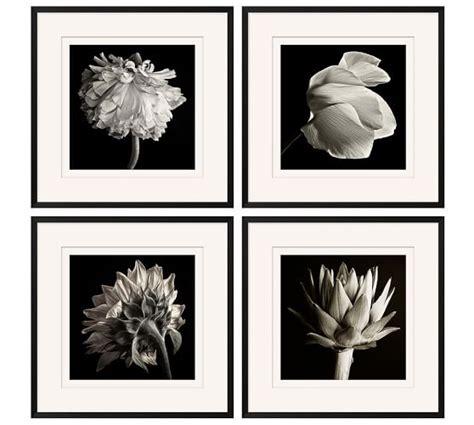 pottery barn prints flower black white framed print pottery barn