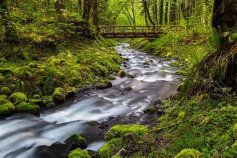 top home interior designers water the bridge oregon nature photography clint