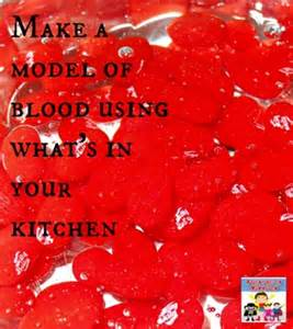 kitchen bin ideas how to make a model of blood