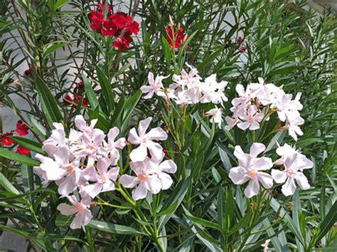 Der Oleander Garten  Oleander Haus
