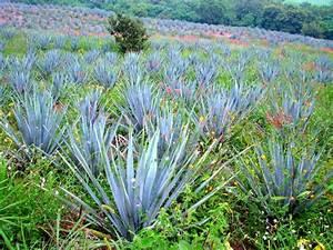 Plantes à Feuillage Persistant : plante persistante liste ooreka ~ Premium-room.com Idées de Décoration