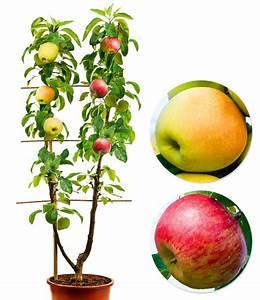 Großen Apfelbaum Kaufen : duo obst apfel 1a qualit t online kaufen baldur garten ~ Lizthompson.info Haus und Dekorationen