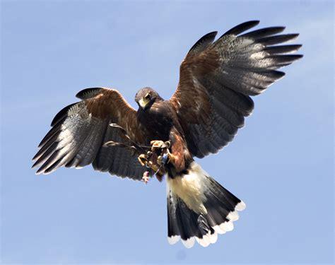 鷹 : スマホの壁紙にお使いください。動物の画像10枚 - NAVER まとめ