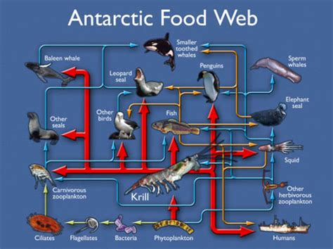 predator  prey  arctic ocean