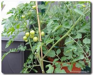 Gemüse Auf Dem Balkon : obst und gem se auf dem balkon pflanzen das meinungs blog ~ Lizthompson.info Haus und Dekorationen