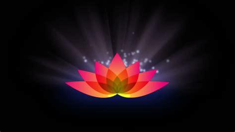 lotus flower  motion light stock footage video