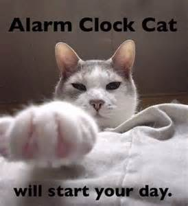 cat alarm clock i m 17 posts from 15 000 and captioning sum duers kittehs