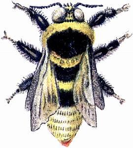 Wonderful Vintage Bumblebee Image! - The Graphics Fairy
