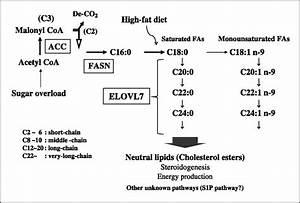 Novel Lipogenic Enzyme Elovl7 Is Involved In Prostate