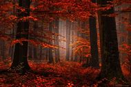 Beautiful Nature Photography of Forests