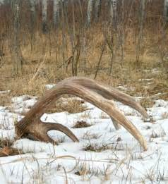 shed hunting iron cooker blog