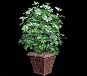 artificial arboricola plant commercial silk int 39 l