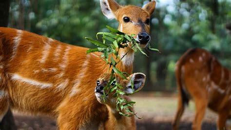 liburan seru  kebun binatang ragunan jakarta pikniek