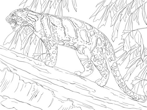 clouded leopard standing  tree coloring page  printable coloring pages