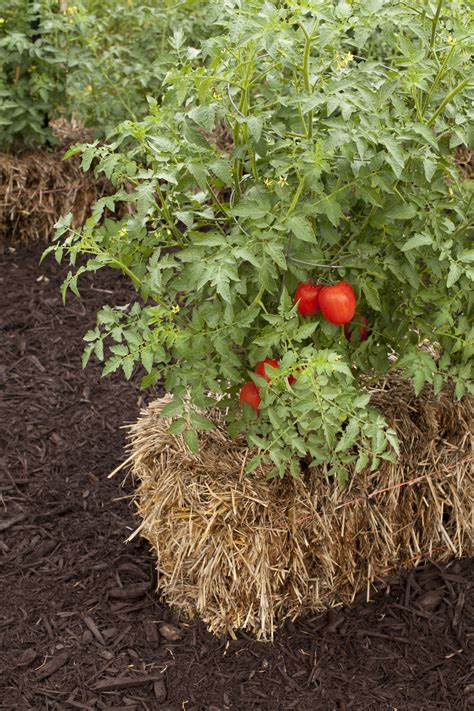 straw bale gardening sg517 straw bale gardening part 3 wrap up