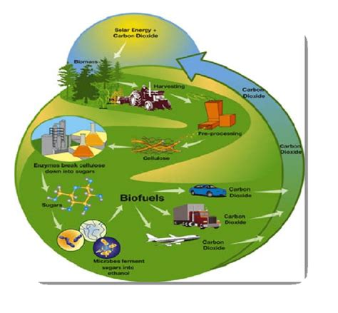 Биотопливо. Растения выручат когда закончится нефть .