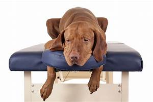 Massage Options For Your Senior Dog By Jennifer Kachnic