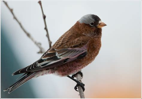 ontario birds and herps 2016 2017 ontario winter bird list