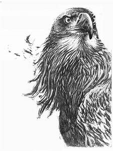 How to Draw a Eagle   Eagle drawing by ~SUBICstevan on ...