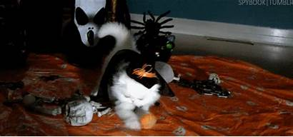 Witch Kitty Halloween Cat Gifs Cats Animal