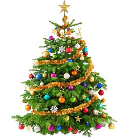 weihnachtsbaum online kaufen echte weihnachtsb 228 ume