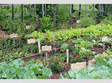 Vegetable Garden Garden Design Container Planters