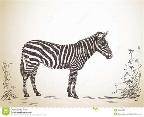 Sketch Of Zebra Stock Vector Image 40304756