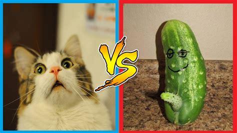 cat funny cucumber cucumbers cats scared vs